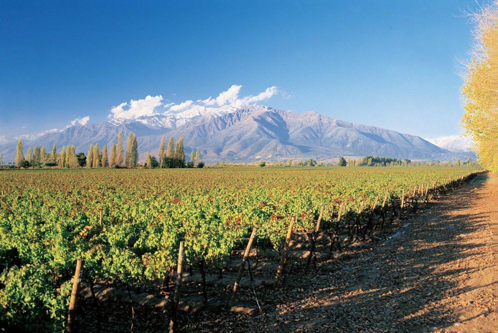 A famosa vinícola Concha y Toro