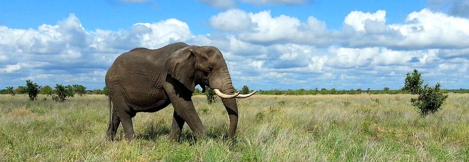 Descubra o Parque Nacional Kruger