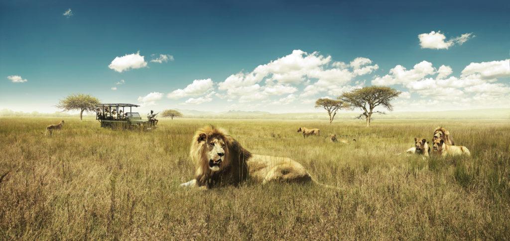 Descubra os safari na África do Sul